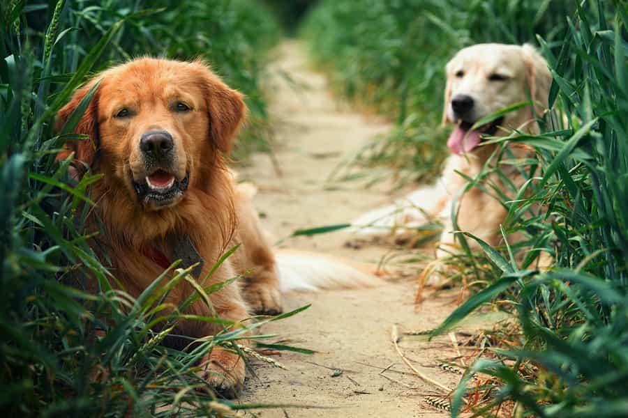Technische Tipps für die Tierfotografie